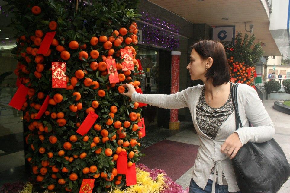 котик мандариновое дерево