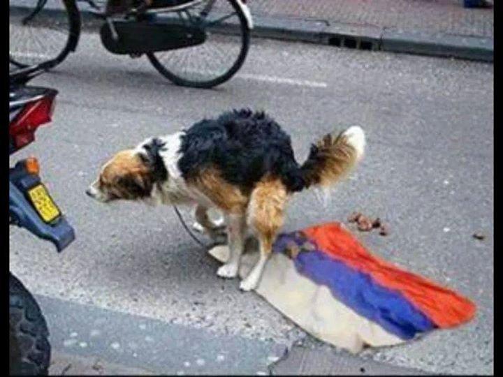 собака на флаг рф