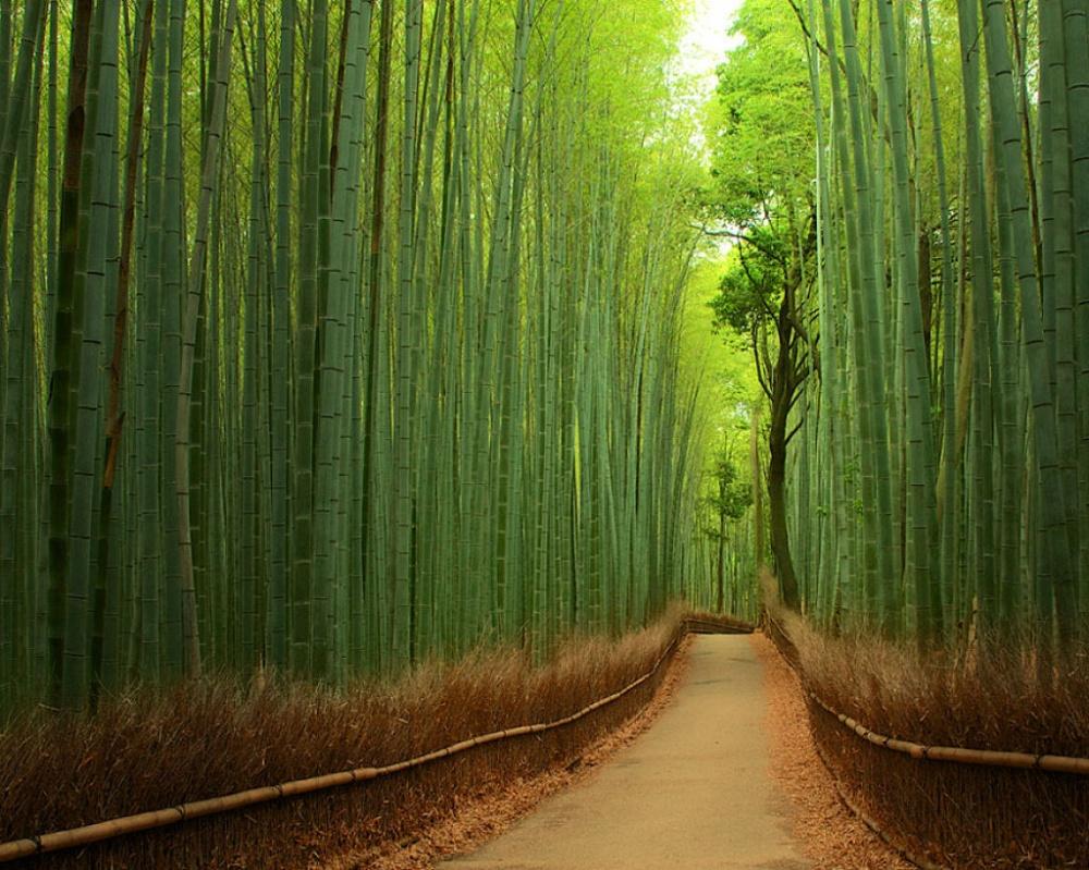 бамб.лес