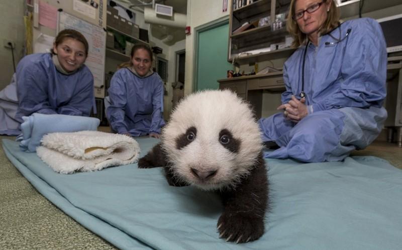 ветеринары.и.панда