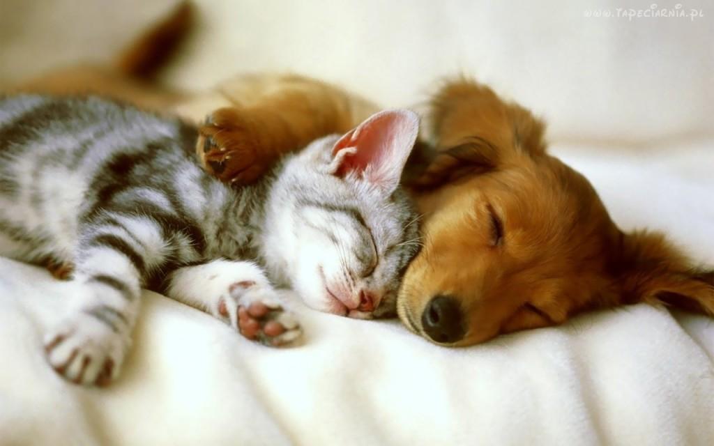 кошка.и.собака