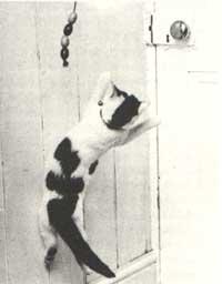 кошка.прыгает