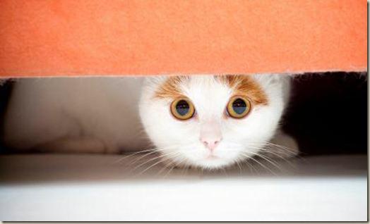кошка.прячется
