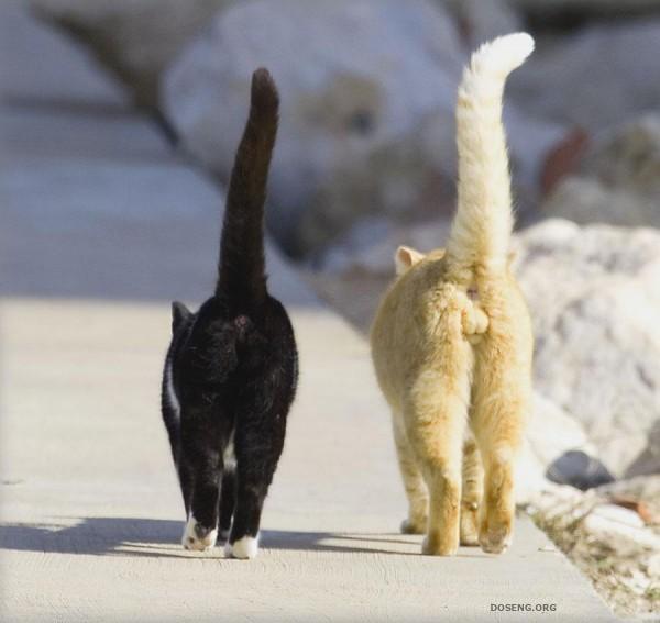 кошка.хвост.2