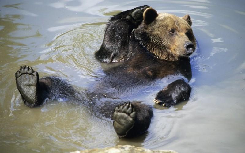 медведь.расслабляется