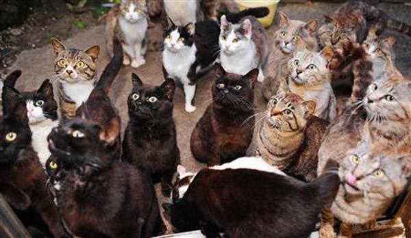 много.кошек