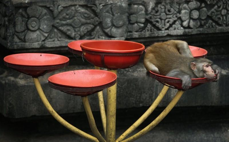 обезьяна.отдыхает