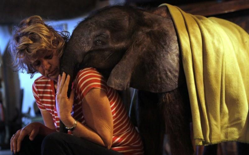 слонёнок-сирота