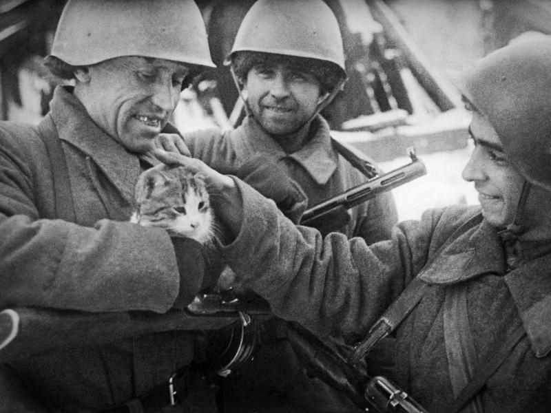 солдаты.с.кошкой
