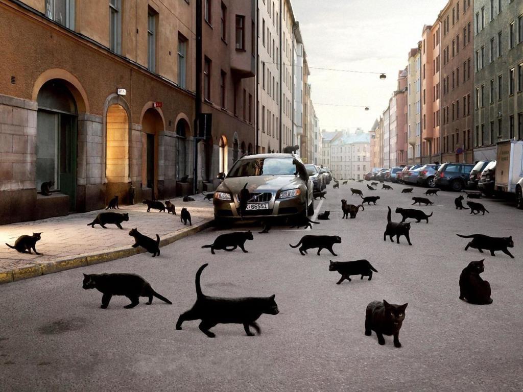 чёрные.кошки