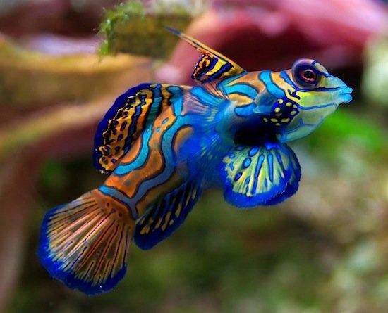 яркие.рыбы