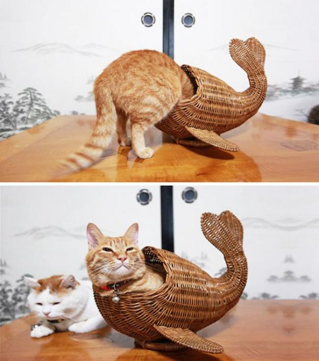 кот.жидк.кит.