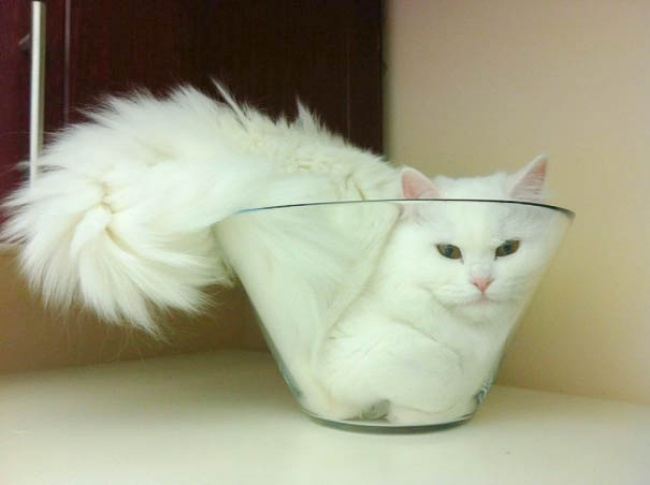 кот.жидк.миска.