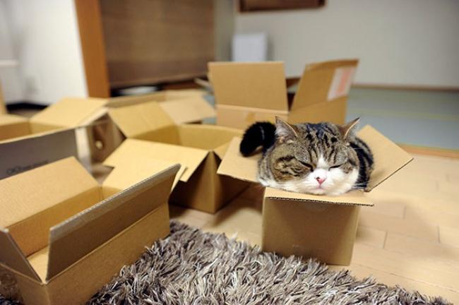 кот.жидк.переезд.