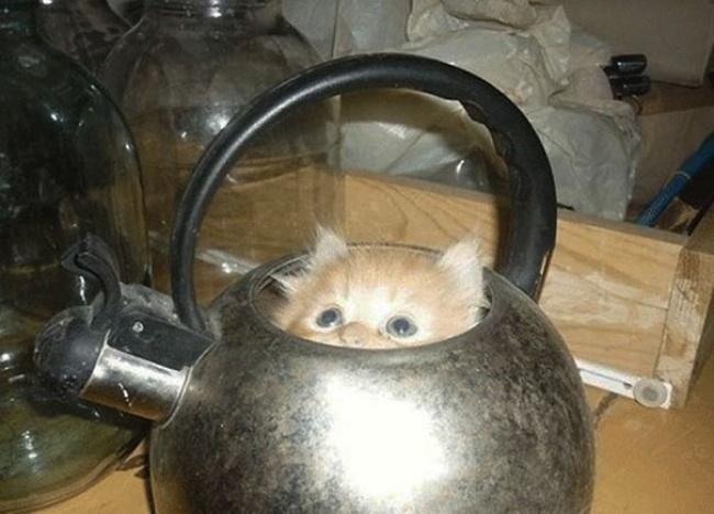 кот.жидк.чай.