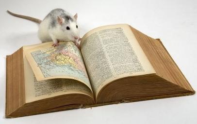 ум.крыса.
