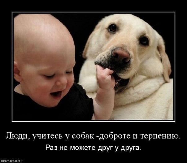 учитесь.у.собак