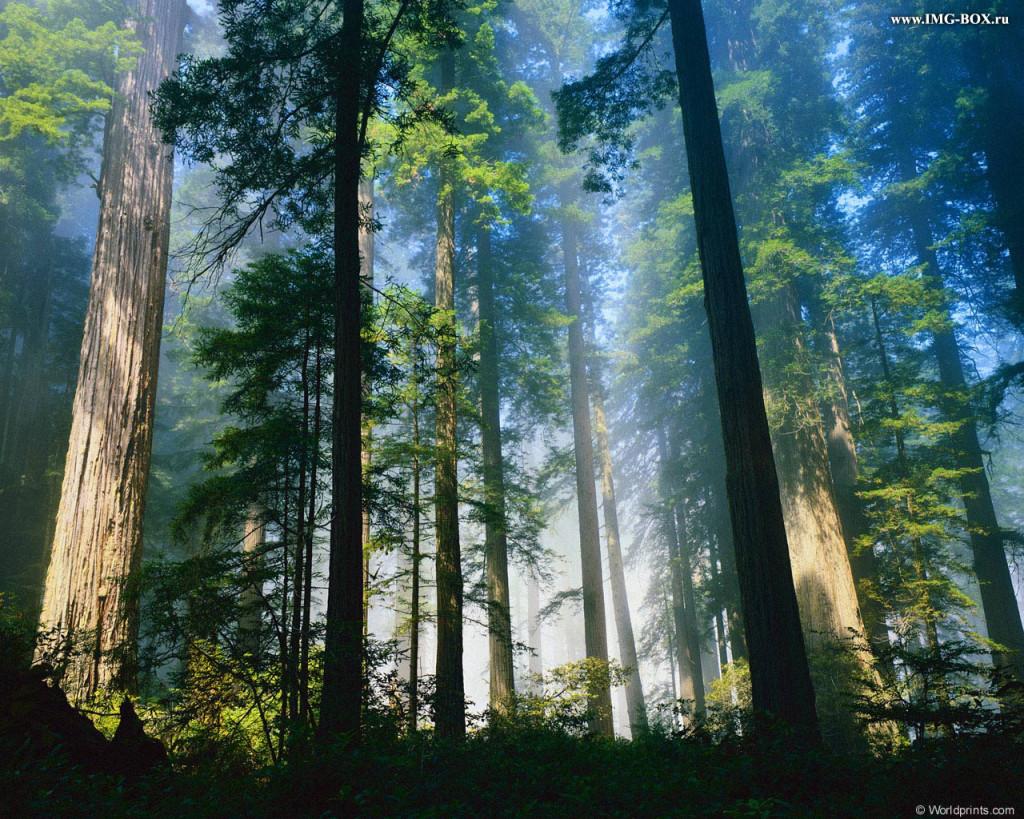 леса.амазонки.