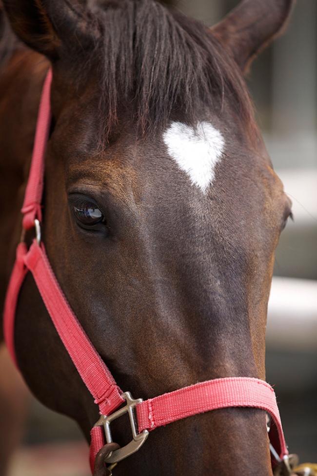 добр.лошадь.