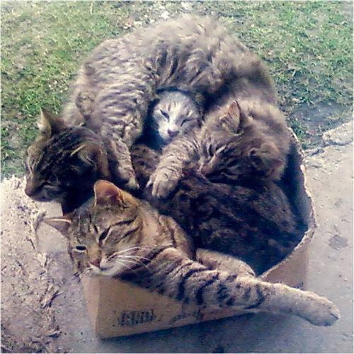 котики.