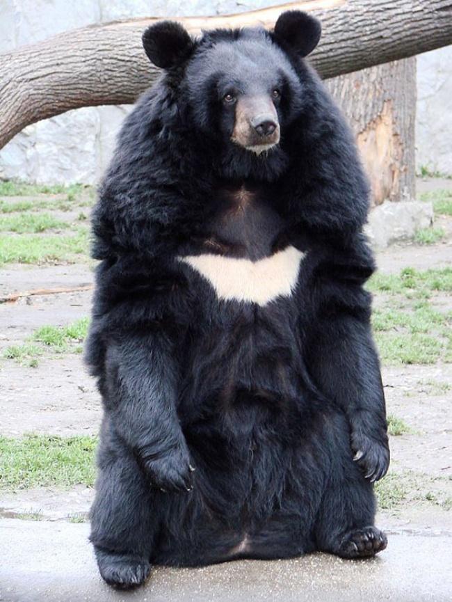 медв.бетм.