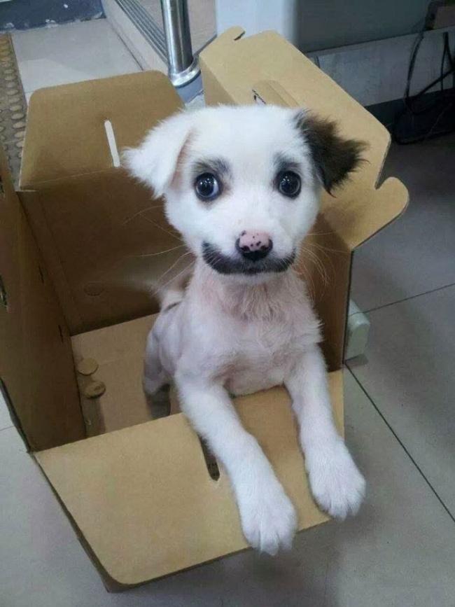 пес.чарли.чапл.