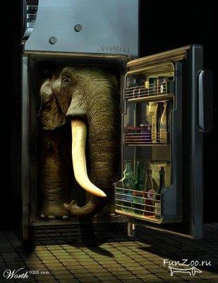 слон.в.холод.