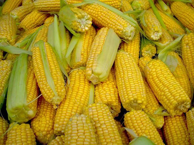 кукуруза.1..